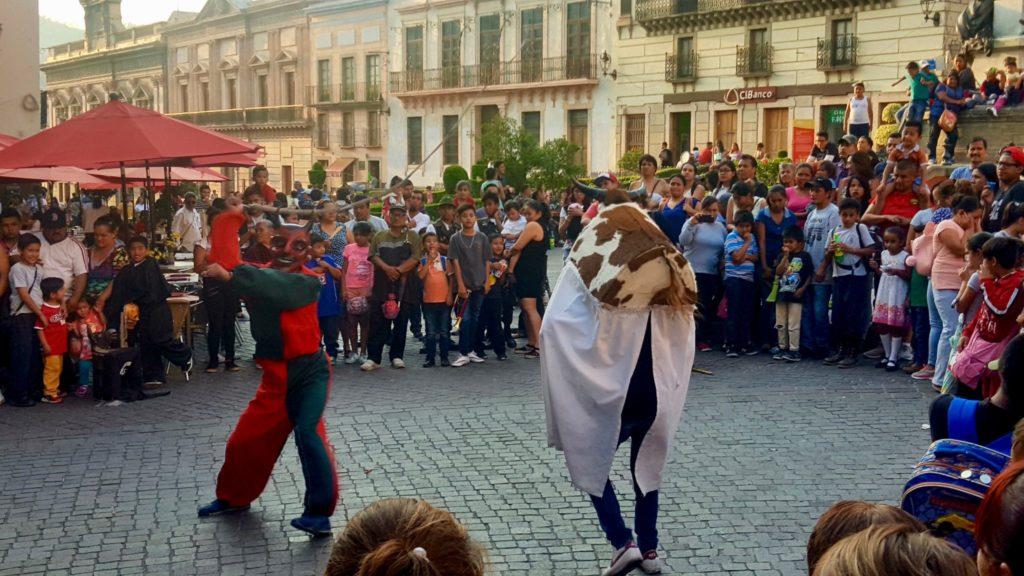 Bulls in Guanajuato