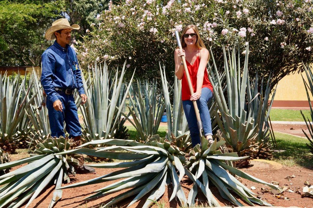 jimador teaching to trim agave with coa at Casa Herradura
