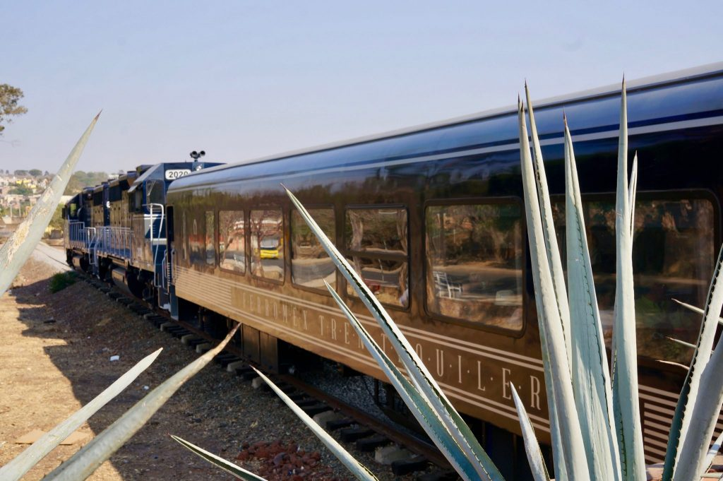 Tequila Herradura Express train and agave plants