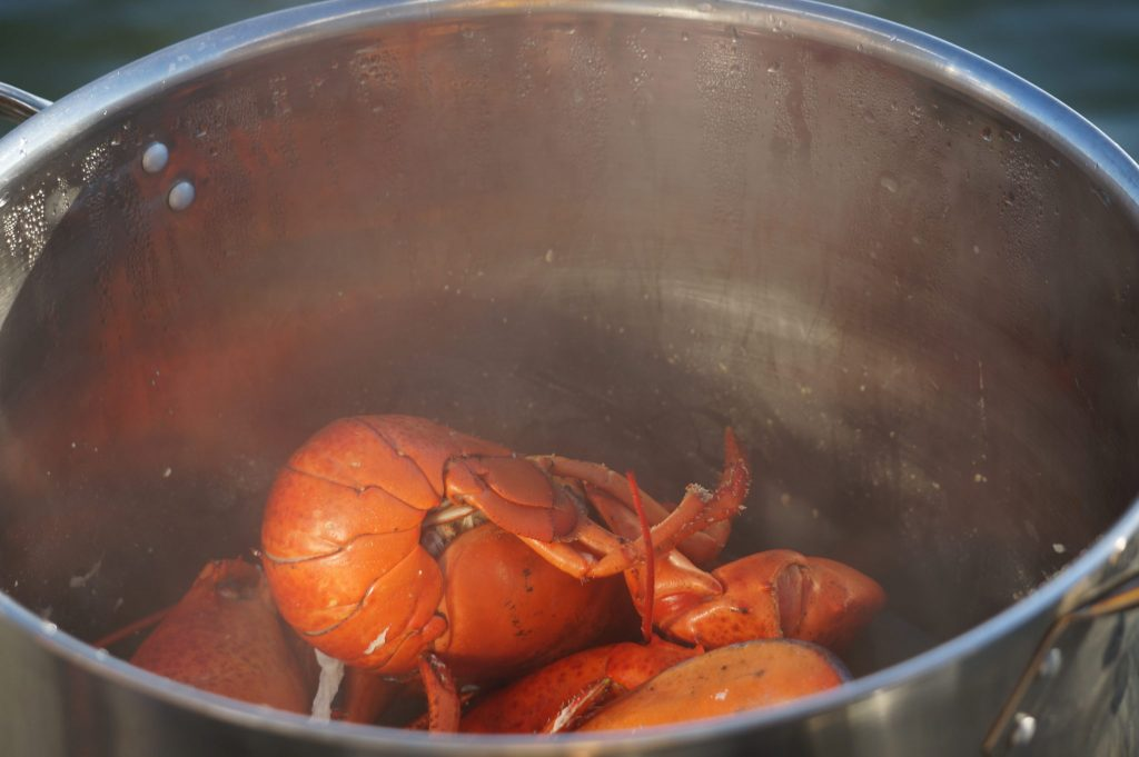 Lobster boil in pot during floating lobster boil in PEI