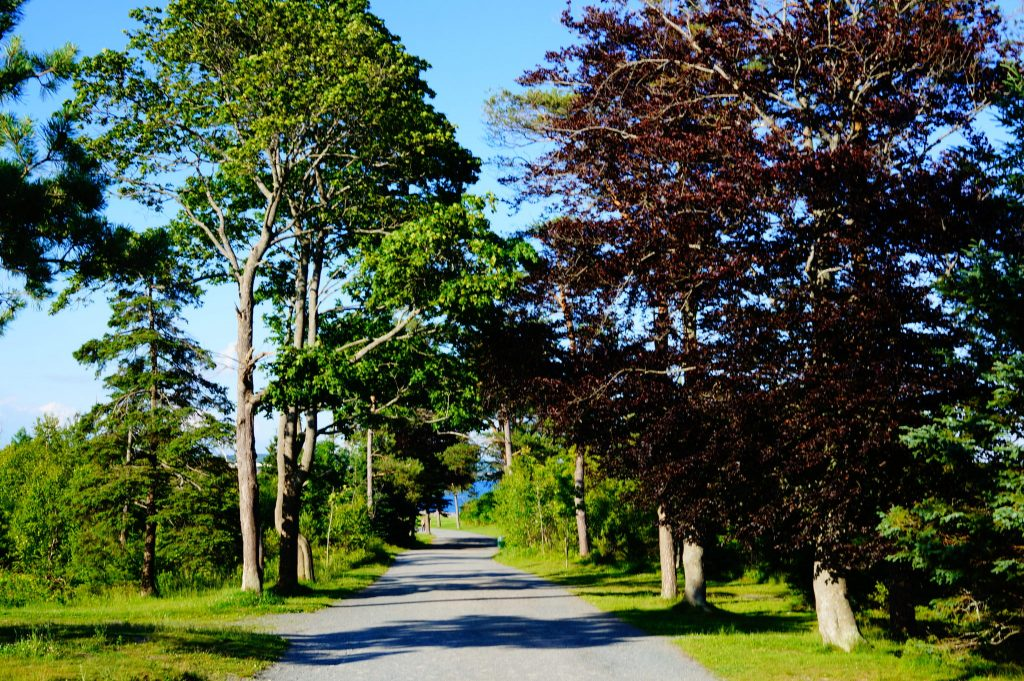 Hiking the trails of Point Pleasant Park is a free thing to do in Halifax on a budget