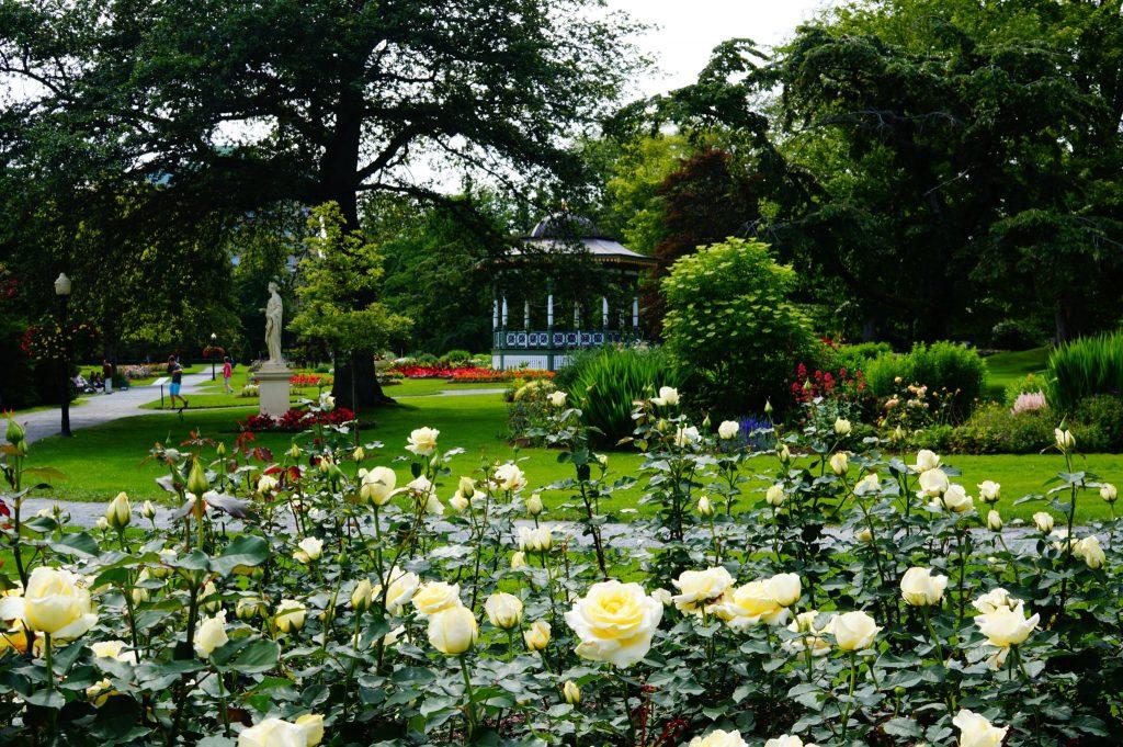 Halifax Public Gardens flowers