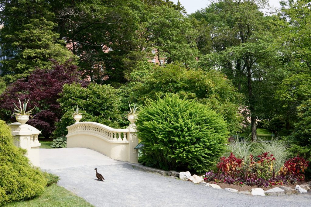 Ducks on bridge at Halifax Public Gardens