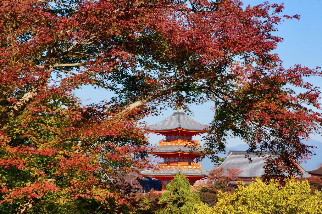 Japanese maple at temple