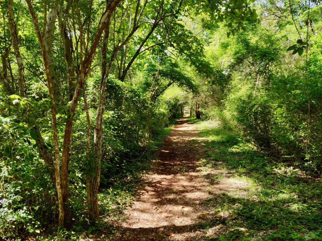 sacbe trail through dry jungle in Yucatan to get to Ruta Puuc ruin sites