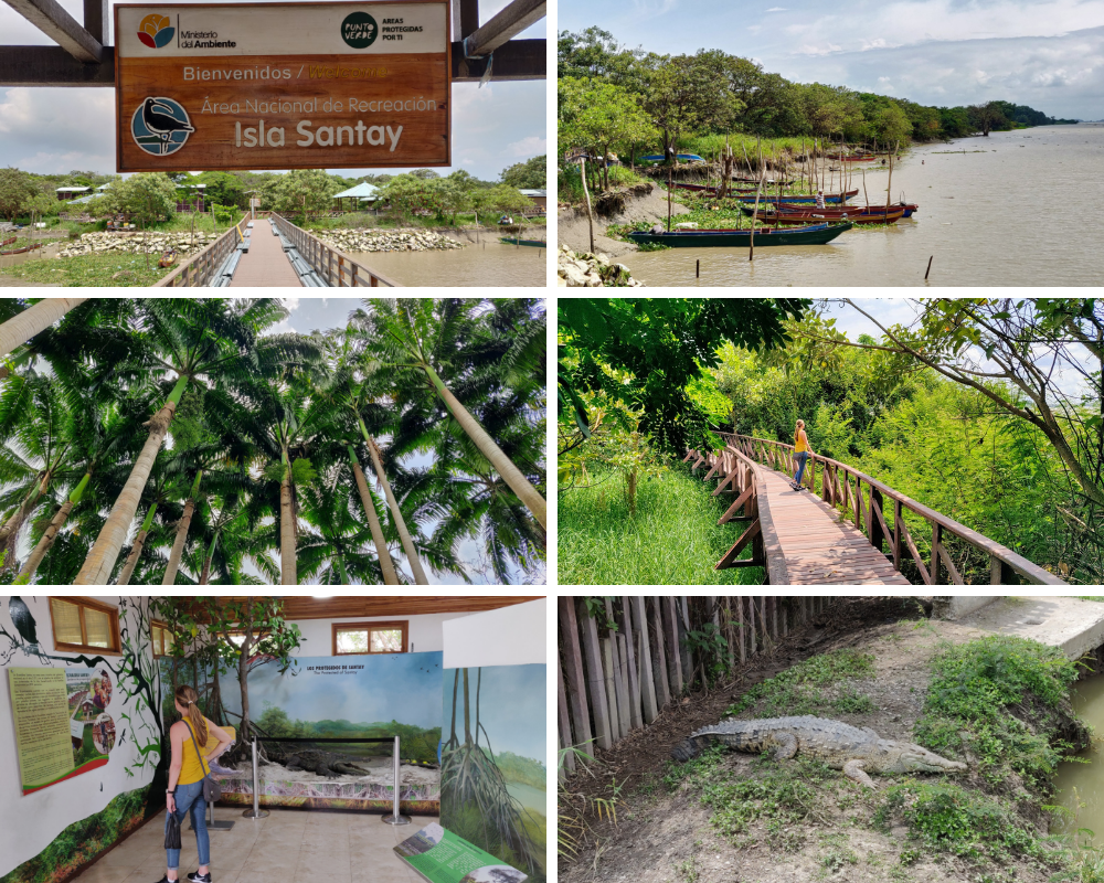 Collage of things to do on Isla Santay Guayaquil Ecuador