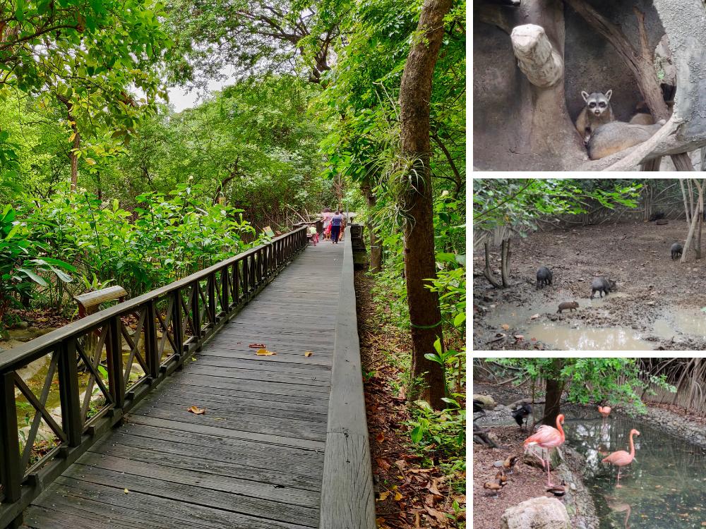 Parque Historico Wildlife Zone Guayaquil Ecuador