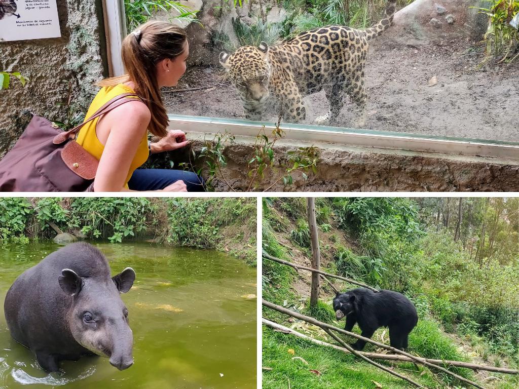 Amaru Biopark Zoo in Cuenca Ecuador