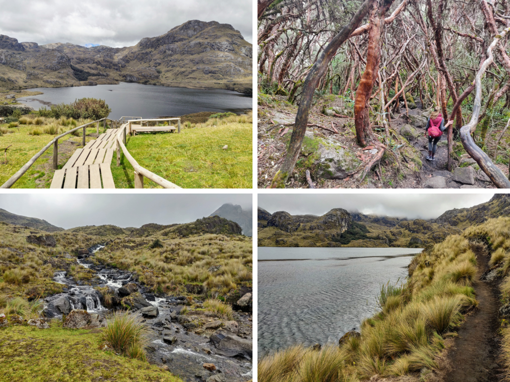 Cajas National Park: boardwalk, Polylepis, river, and hiking trail next to lake