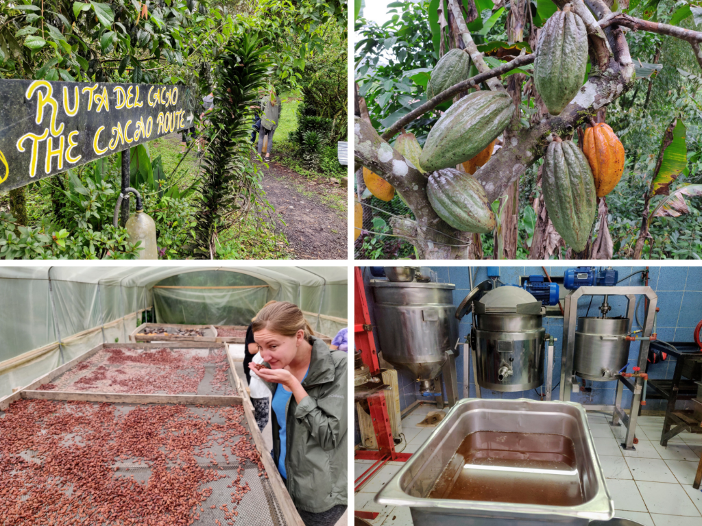 Mindo Chocolate Factory Tour collage: chocolate route, cacao beans, sniffing choclate nibs, and chocolate refinery