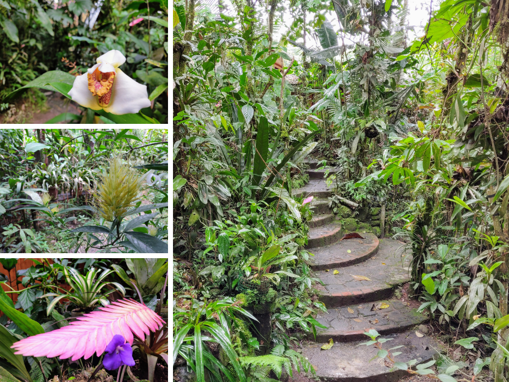 Mindo Orchid Garden collage of pathway, orchids, and bromeliads