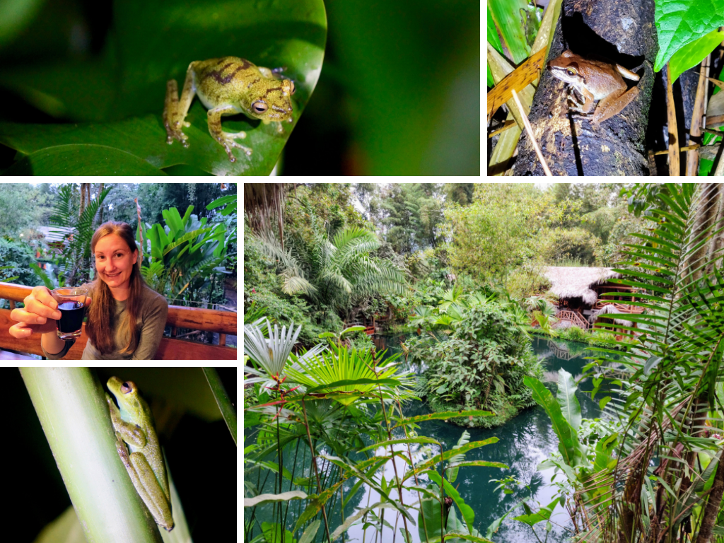 frog concert collage: Mindo Lake, sipping wine, and various frogs