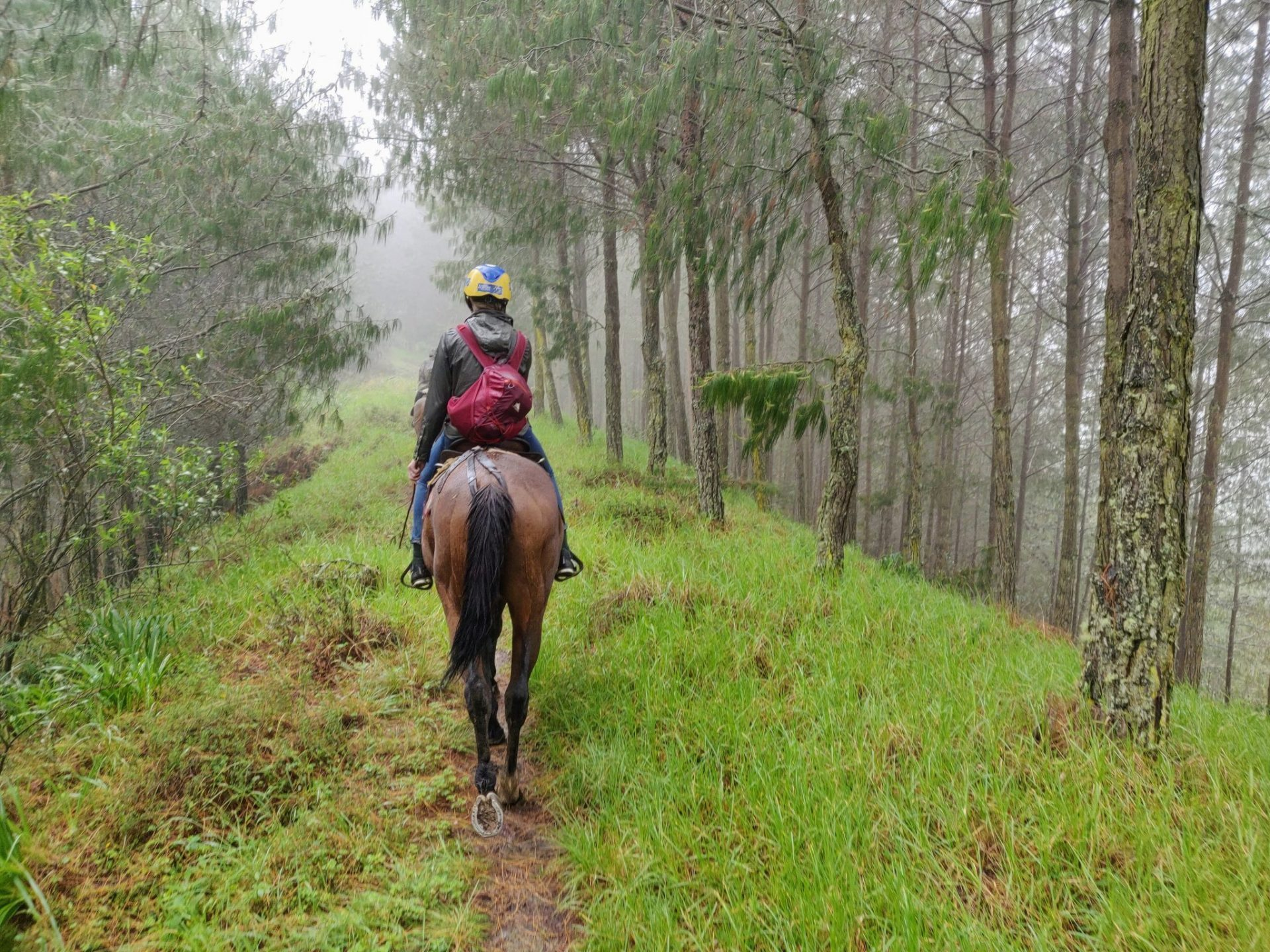 horseback riding through trees in the mountains near Cuenca