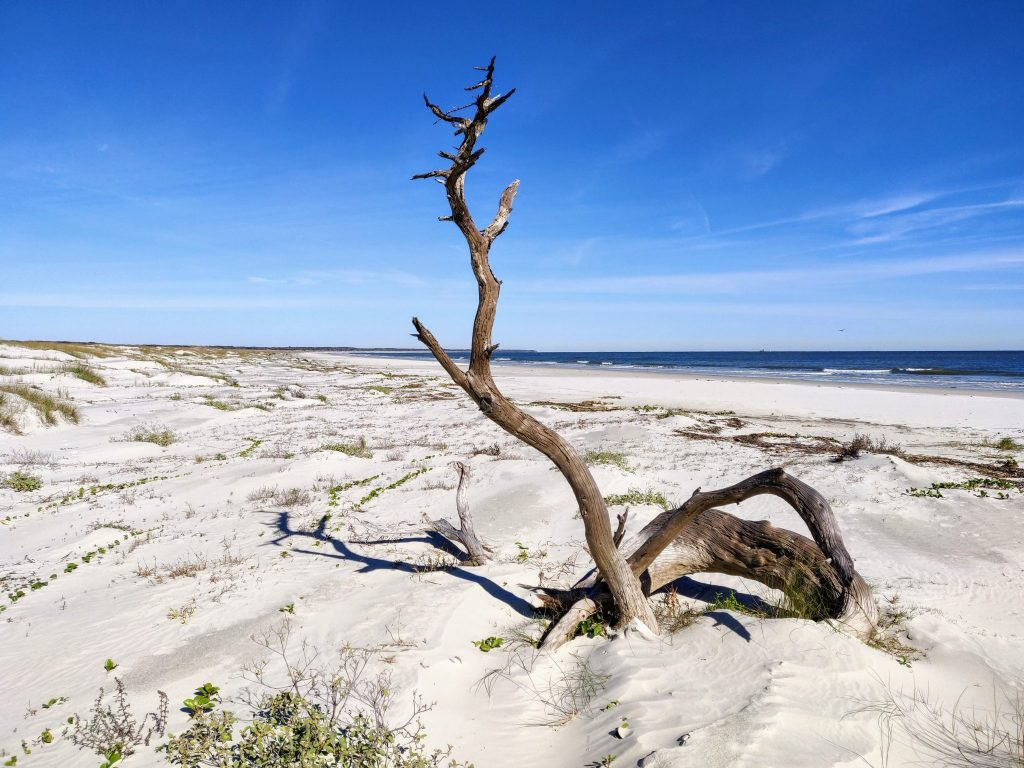 driftwood on an empty natural beach with blue skies on Cumberland Island beach