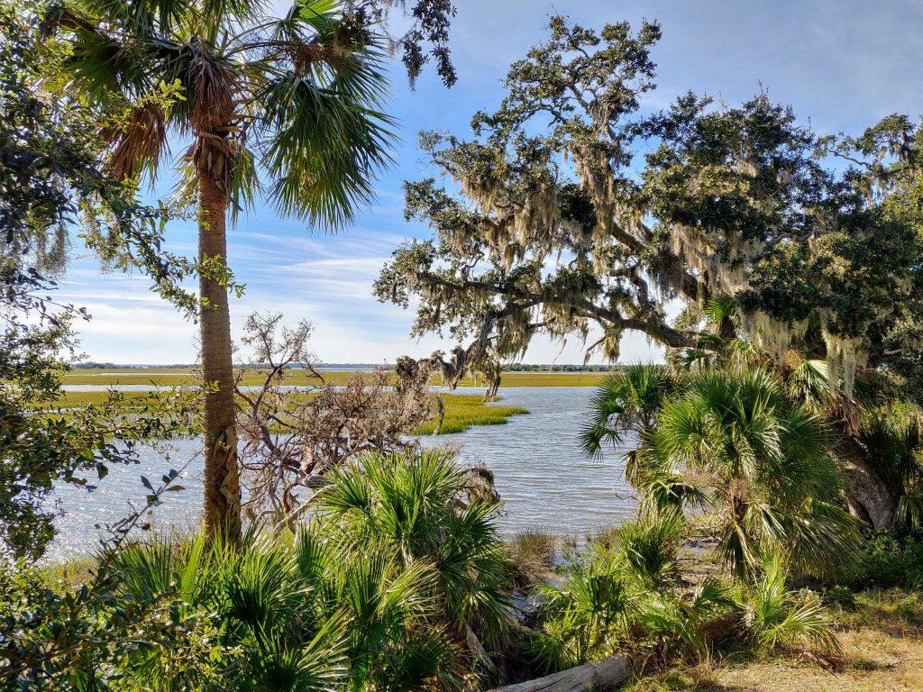 Cumberland Island trees and marshland