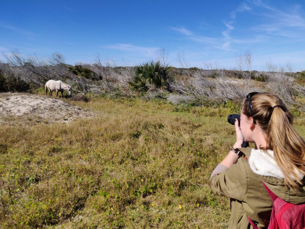photographing horse from a distance on Cumberland Island