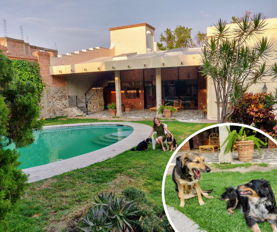 two dogs at housesit in Chapala Mexico